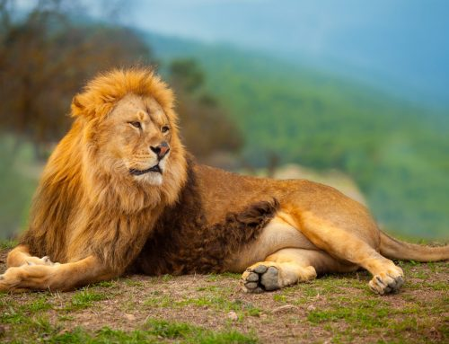 5 outstanding lessons I have learned from THE Lion: Dan Tyre's Pipeline Generation Bootcamp
